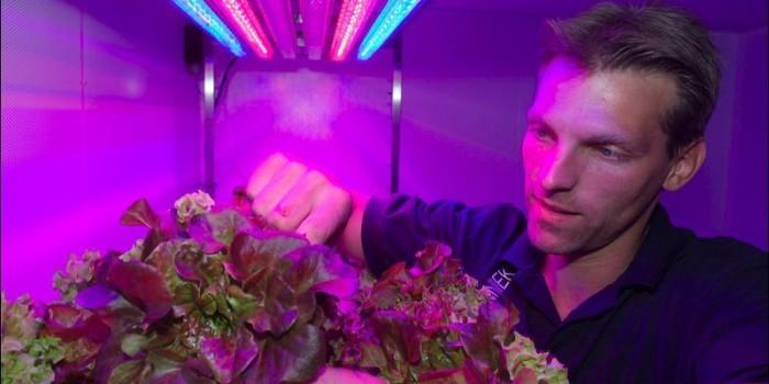 Las plantas del futuro crecerán sin luz solar