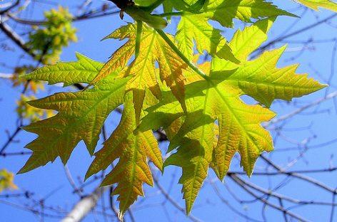 Los árboles serán más eficaces limpiando el aire