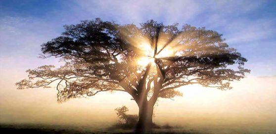 Hay que generar ese espacio de silencio, de disponibilidad frente a la existencia