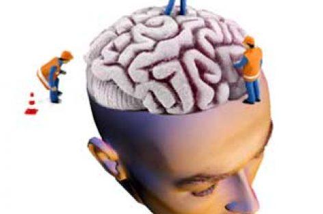 La neurociencia estudia cómo funciona y cómo se produce nuestro comportamiento