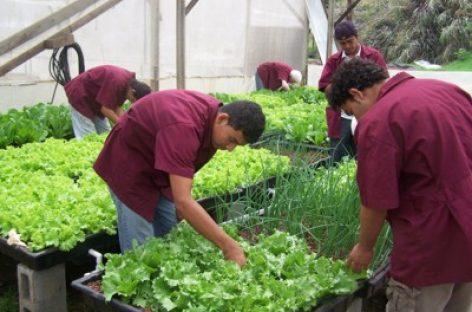 Nuevas formas de negocio para la agricultura