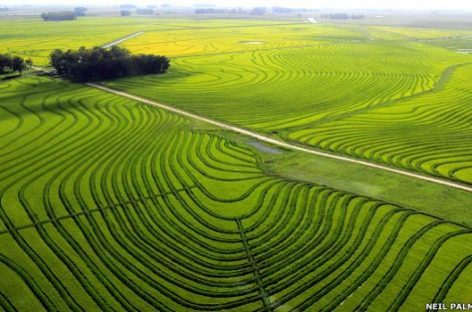 El éxito del arroz uruguayo