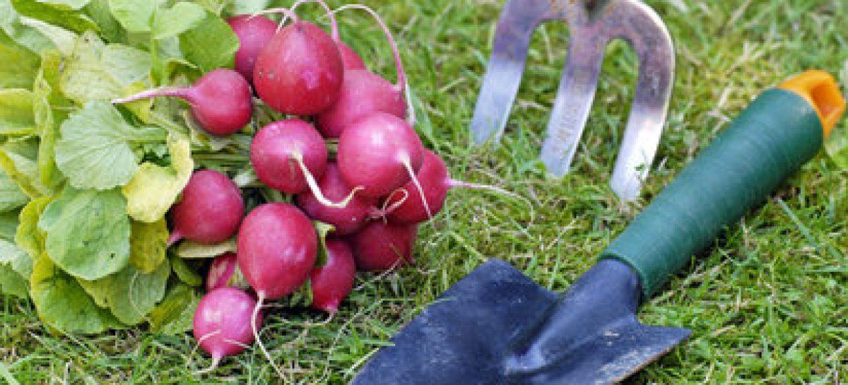 Cultivar con menos productos químicos
