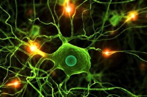 Posible nueva terapia para la epilepsia