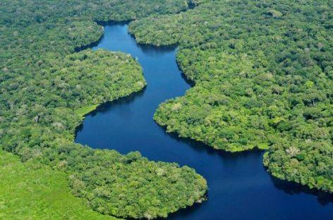 Disminuye la deforestación amazónica
