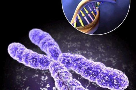La genética avanza