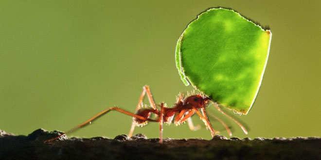 Las hormigas predicen terremotos