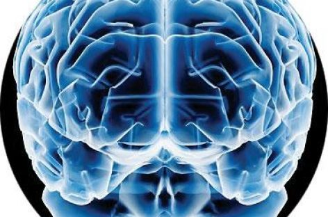 Una pequeña revolución en la neurociencia