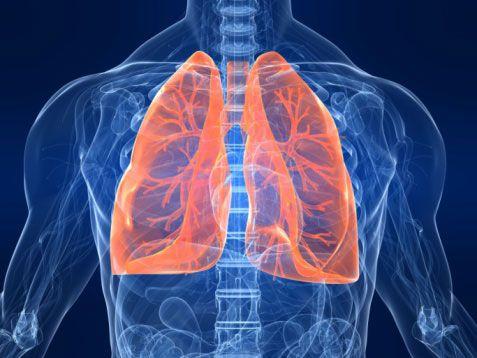Se crea el primer pulmón artificial