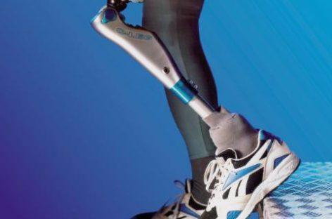 La regeneración de extremidades, un paso más cerca