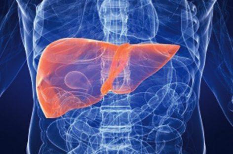 Un hígado funcional a partir de un trozo de piel humana