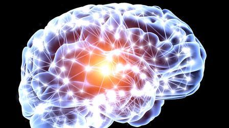 brain-minicerebro humano