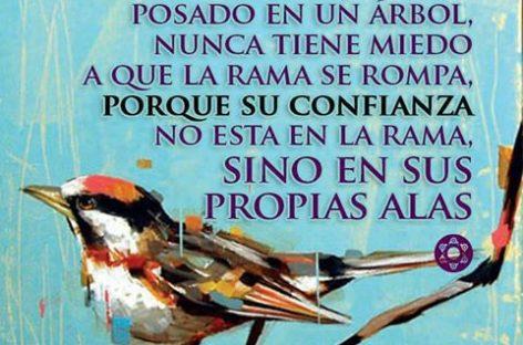 La confianza del pájaro
