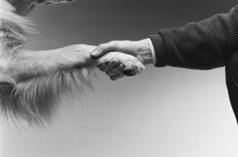 Perros que alertan de los niveles de azúcar en sangre