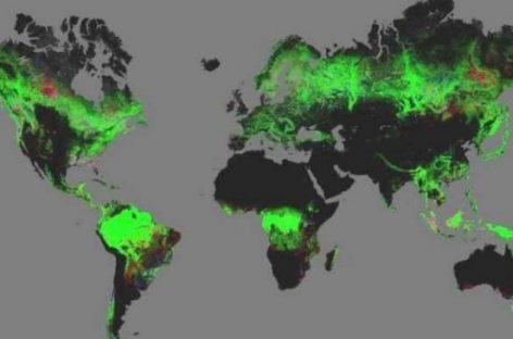 La tecnología, un arma contra la deforestación