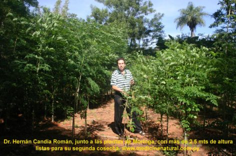 Un cultivo contra la desnutrición