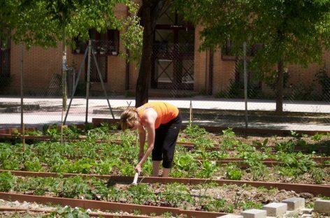 Huertos compartidos, una tendencia sostenible y saludable