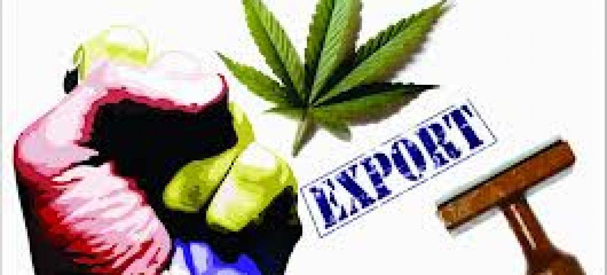 Marihuana para investigación, solicitan a Uruguay que exporte
