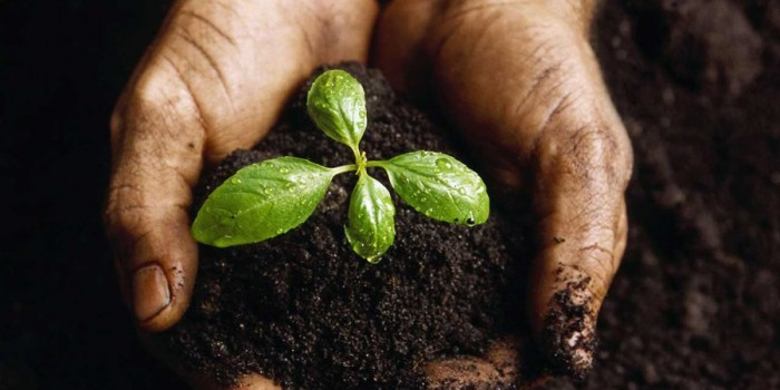 Agricultura ecológica, el mercado crece en tiempos de crisis