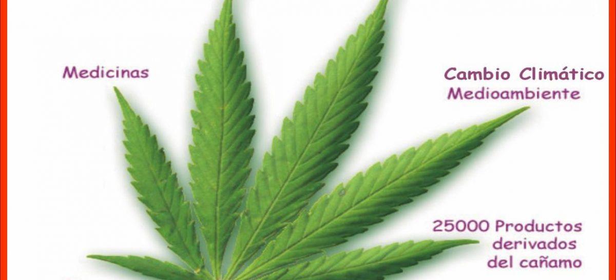 Cannabis, usos positivos más allá de la droga