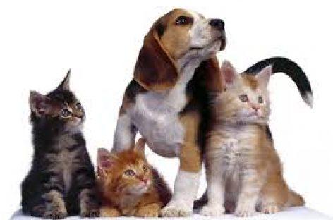 Mascotas, las influencias positivas para las personas