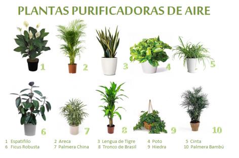 Plantas que funcionan como filtro de sustancias tóxicas