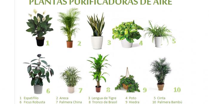 Plantas de interior como filtro de sustancias t xicas el - Macetas para plantas de interior ...