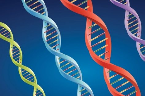 Crean el primer cromosoma artificial a base de levadura