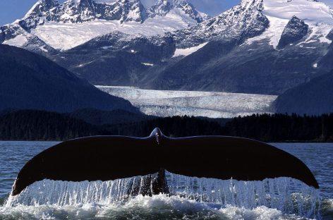 La Haya prohíbe la caza científica de ballenas en la Antártida