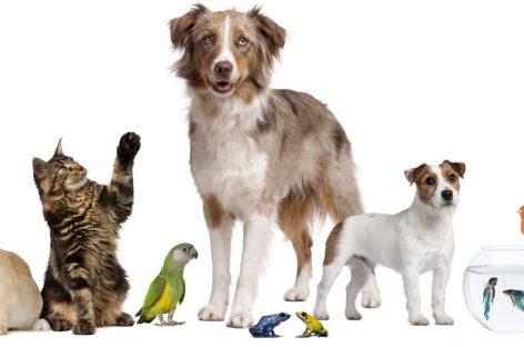 Uruguay legisla para proteger los derechos de los animales
