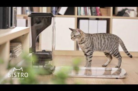 La tecnología llega al mundo de las mascotas