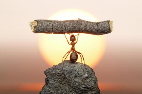 Cómo la resiliencia ayuda a superar adversidades