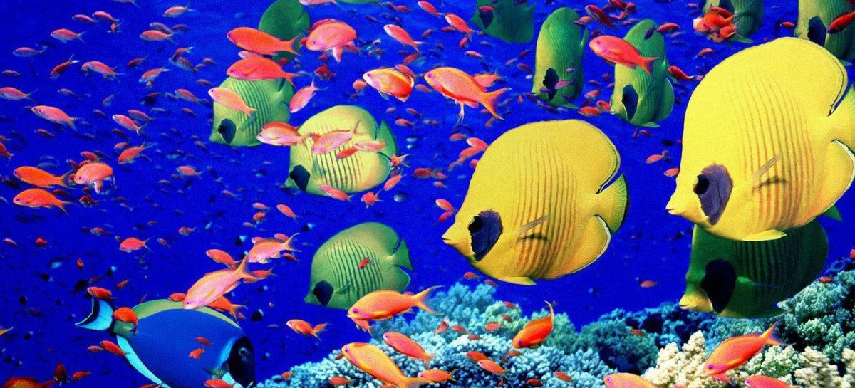 Creatividad: nuevas formas de salvar los océanos