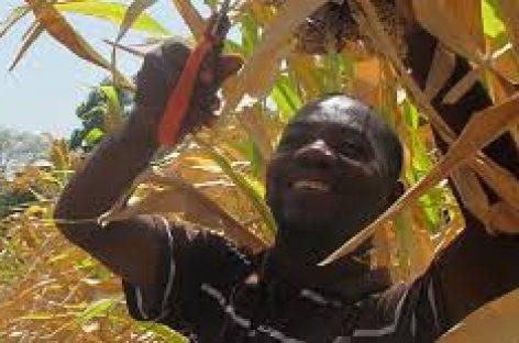 Inodoros en Haití mejoran la sanidad y agricultura
