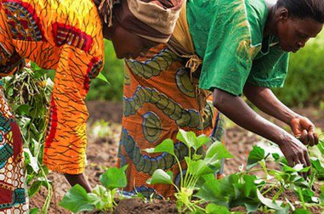 Tecnología que empodera a las mujeres productoras en África