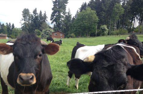 Las granjas éticas y su vuelta a los orígenes