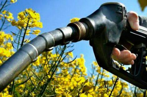 El agave como parte del futuro biocombustible