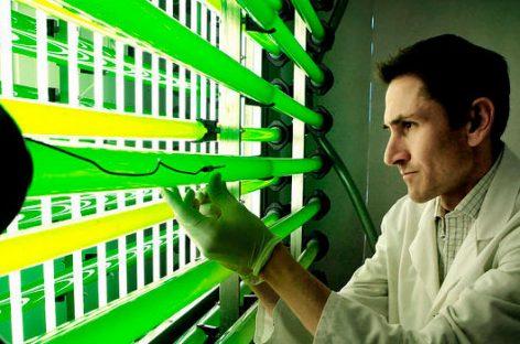 Nuevos cultivos con impronta tecnológica