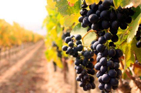 Enoturismo: una rica propuesta para los amantes del vino