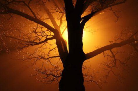 La luz es vida