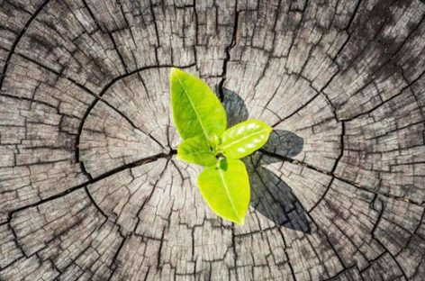 Manual de resiliencia: crecer ante la adversidad