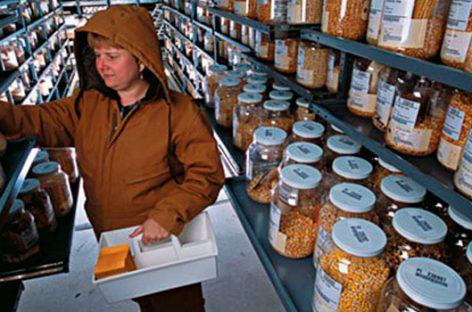 Los bancos de semillas protegen la biodiversidad