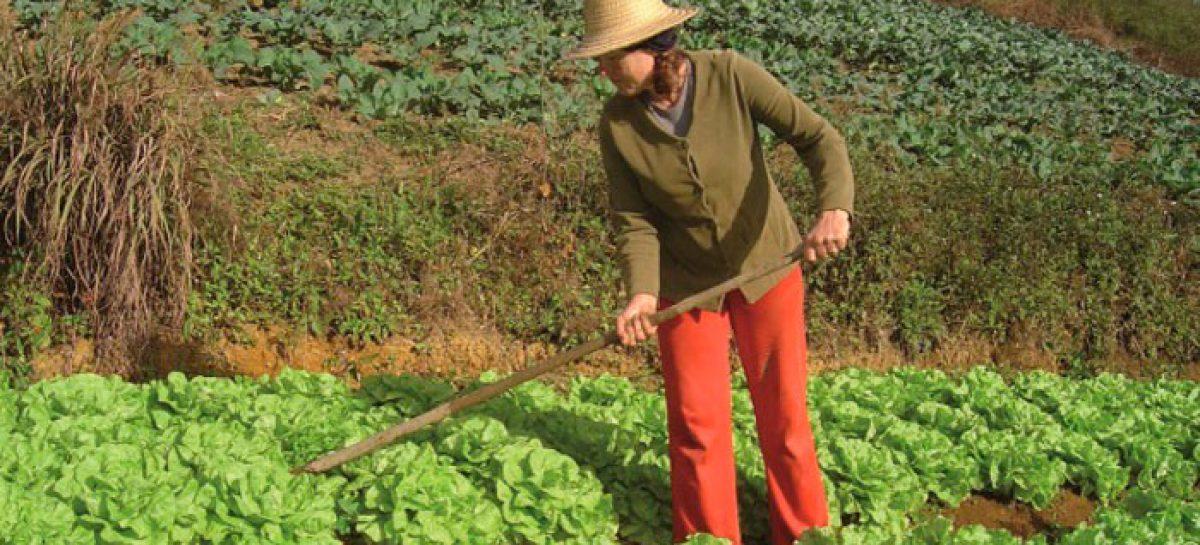 Mujeres agricultoras suministran al Programa Mundial de Alimentos en Ecuador