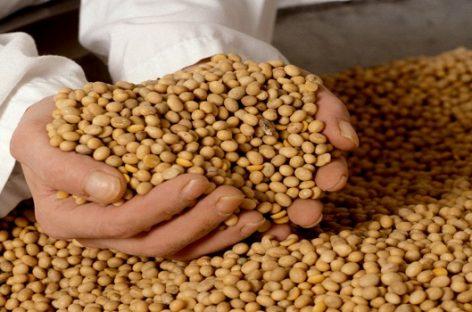 Agricultores se benefician de cultivar alimentos no transgénicos