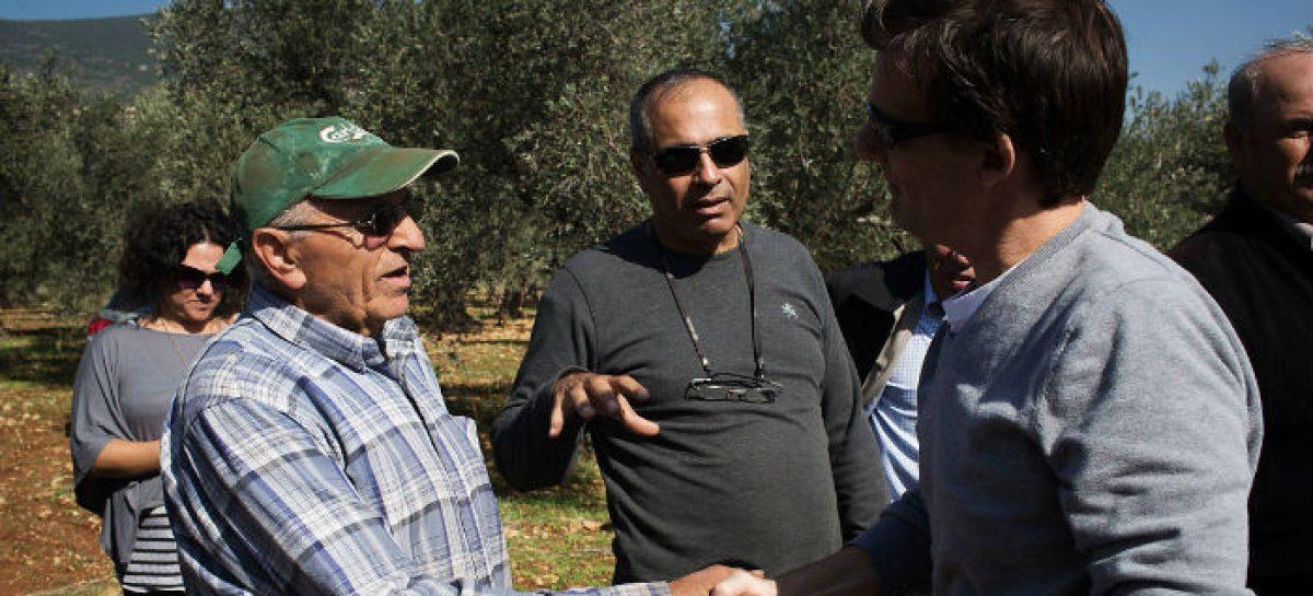 El aceite de oliva, motivo de unión entre palestinos e israelíes