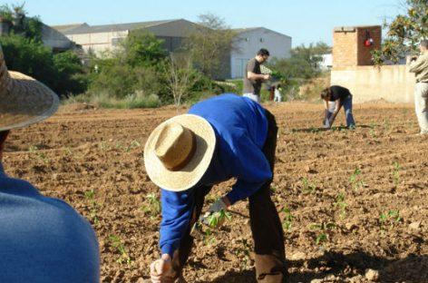 Huertos ecológicos: cuidando la tierra que nos da de comer