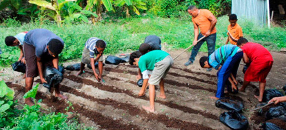 Huertos colectivos que mejoran la alimentación en Haití