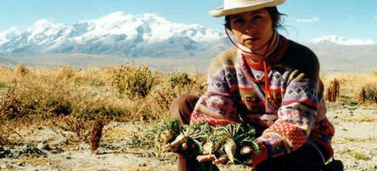 Maca, el afrodisíaco de los Andes peruanos | En Positivo
