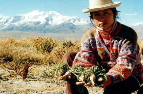 Maca, el afrodisíaco de los Andes peruanos