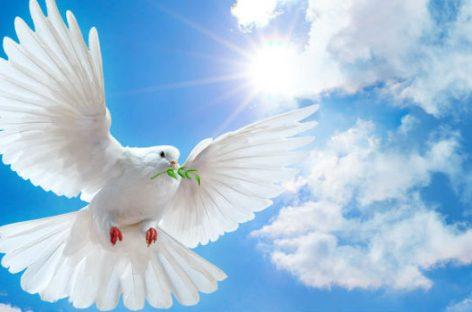 Vivimos la era más pacífica de la historia